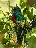 quetzal hll
